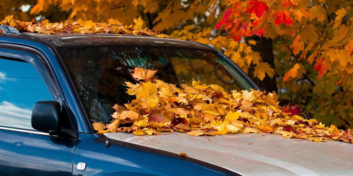 Laub auf der Haube? So pflegen Sie Ihr Auto im Herbst
